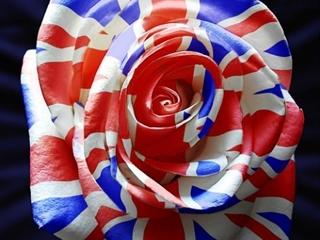 Роза с лепестками цвета флага